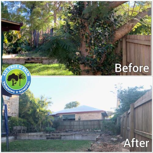 Tree Pruning Redcliffe
