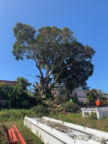 Tree Removal Redcliffe